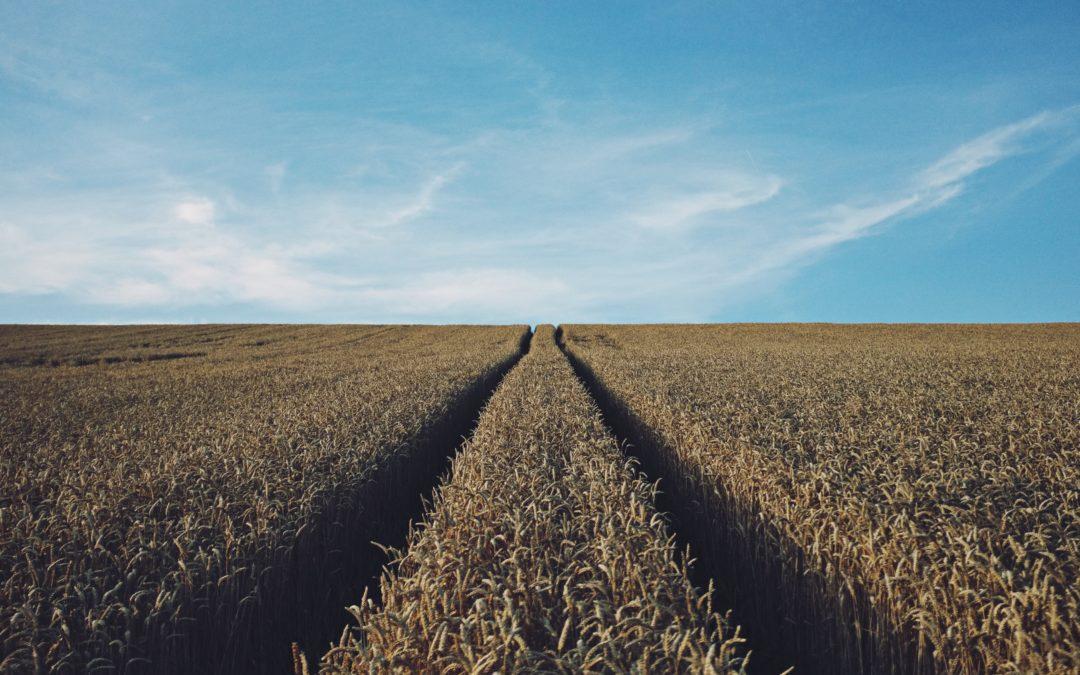 Como vender através do marketing no agronegócio?